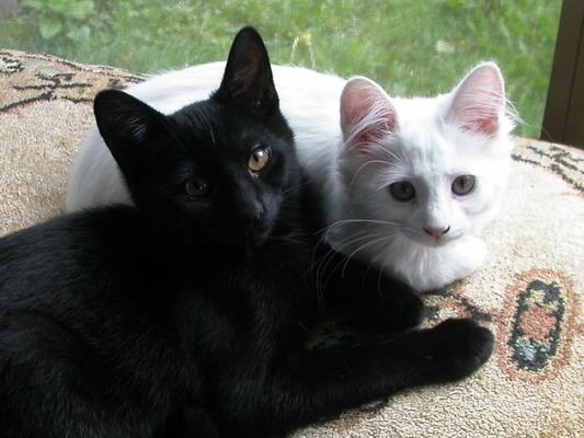 Alert Kittens by Josh Poulson
